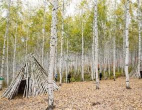 원대리 자작나무 숲은 인제읍 원대리에 자리하고 있다. 찾아가는 길은 어렵지 않다. 원대리 산림감시초소에서 시작하면 된다. 초소에서 방명록을 작성한 뒤 약 3.5km의 임도를 따라 올라간다. 산허리를 따라 부드럽게 이어진 길은 남녀노소 모두 별 무리 없이 걸을 수 있는 길이다. 숲에 들어서면 자작나무 코스, 치유 코스, 탐험 코스 등 여러 산책코스가 있다. 별다른 구분 없이 서로 연결되어 있어 코스에 구애받지 않으며 거닐 수도 있다. 한 번도 경험하지 못한 풍경을 품은 겨울의 자작나무 숲은 그 자체로 휴식과 치유를 준다. 머릿속을 가득 채운 골치 아픈 생각들은 저절로 사라지는 진정한 자연 속 쉼터이다.